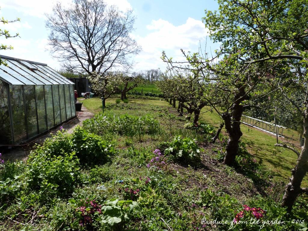 Kitchen garden 'before'