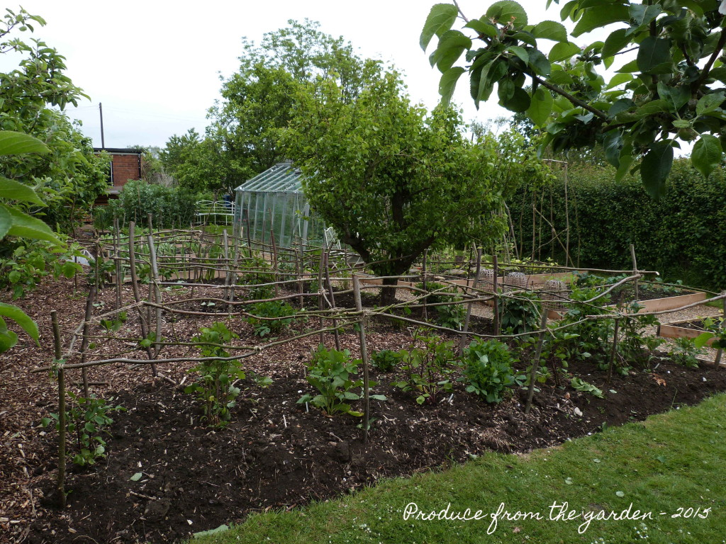 Dahlia bed with frame