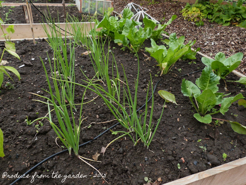 Shallots and Spinach
