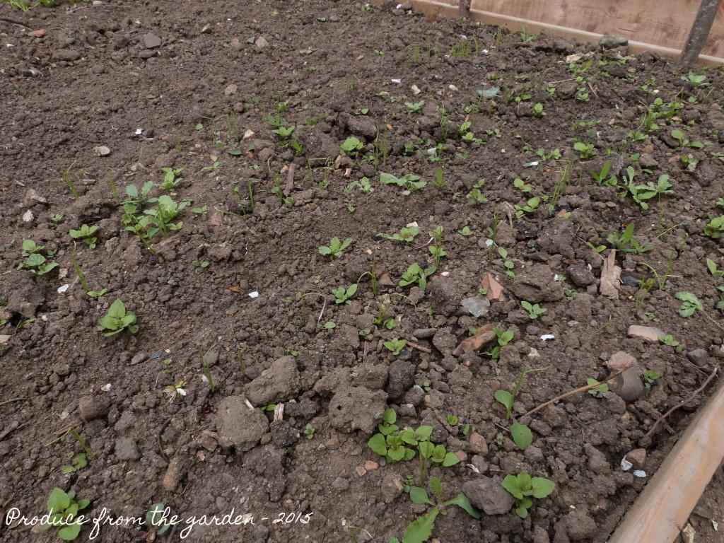 weed seedlings
