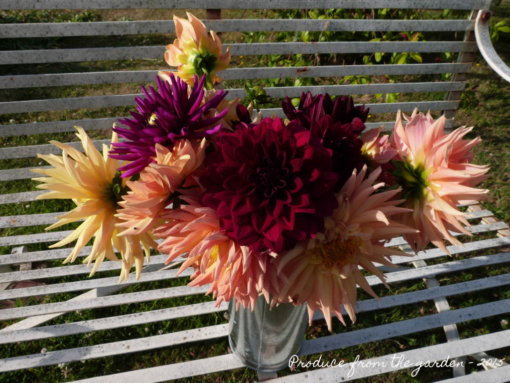 First bucket of dahlias this year