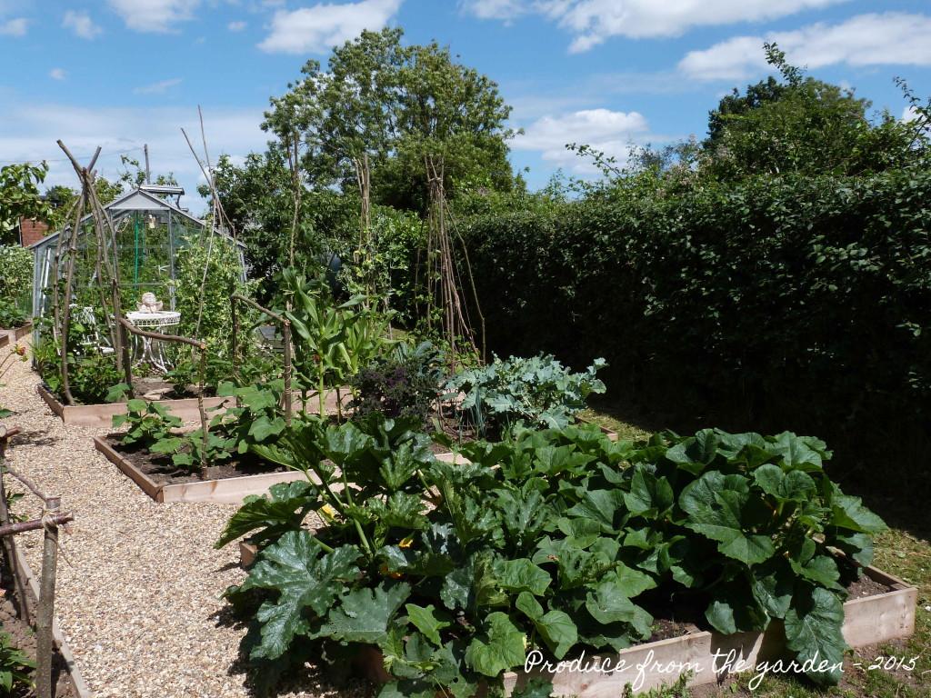 Kitchen Garden - lower veg patch