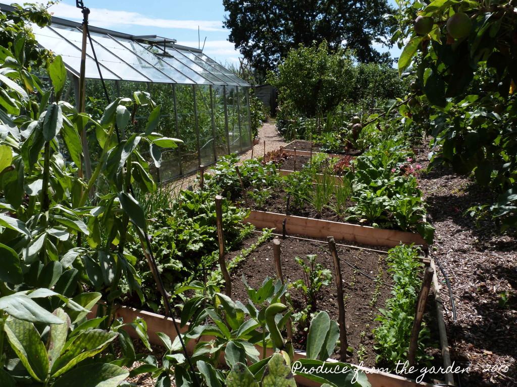 Kitchen garden - upper veg patch