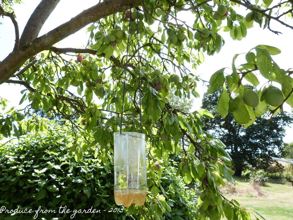 home made wasp trap