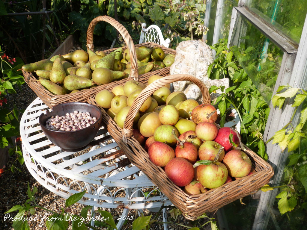 Apple and pear harvest
