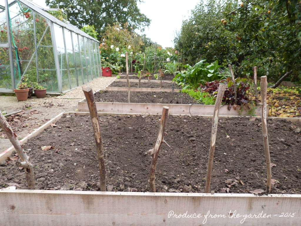 Outside autumn veg sowings