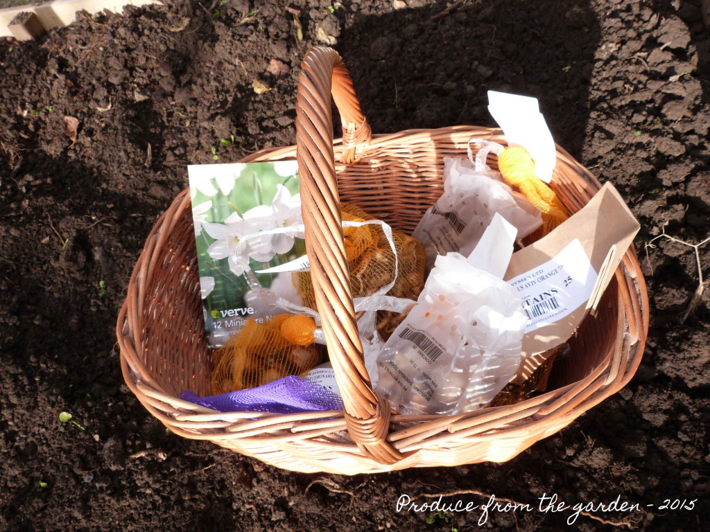 A basket of bulbs to be planted