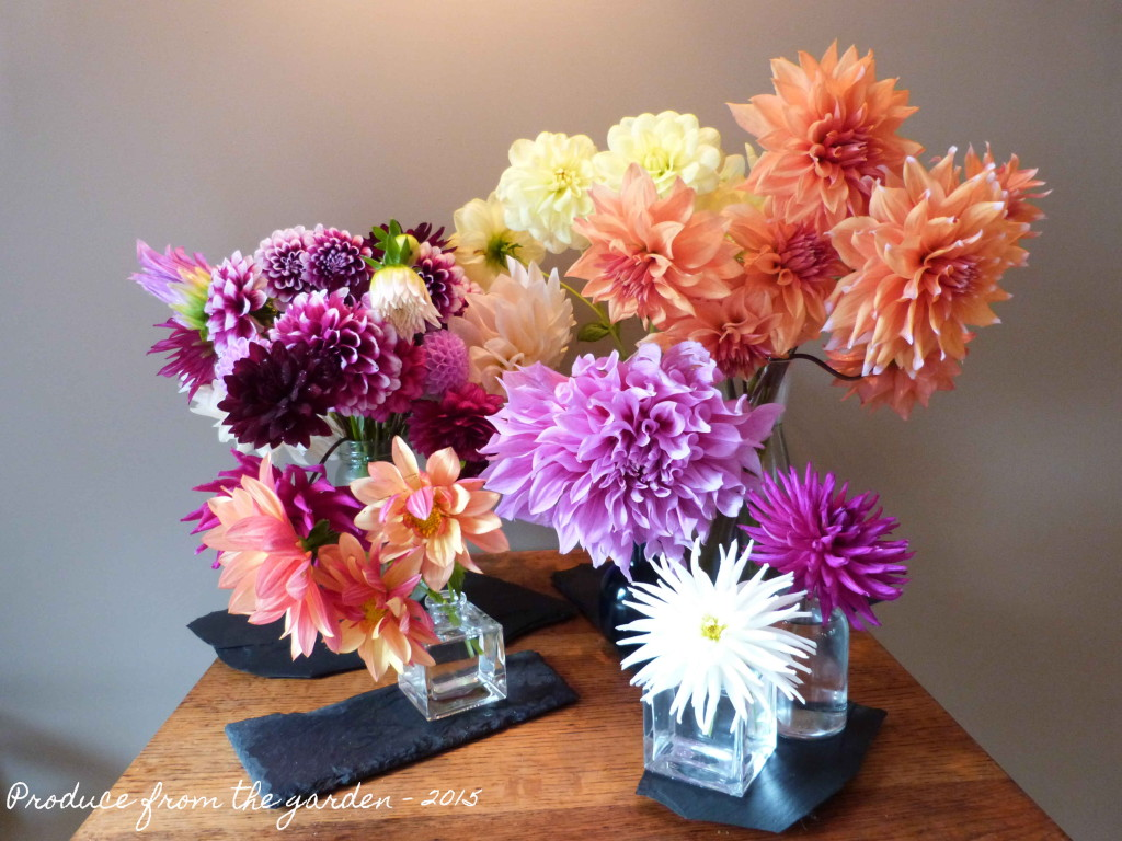 Dahlias in November