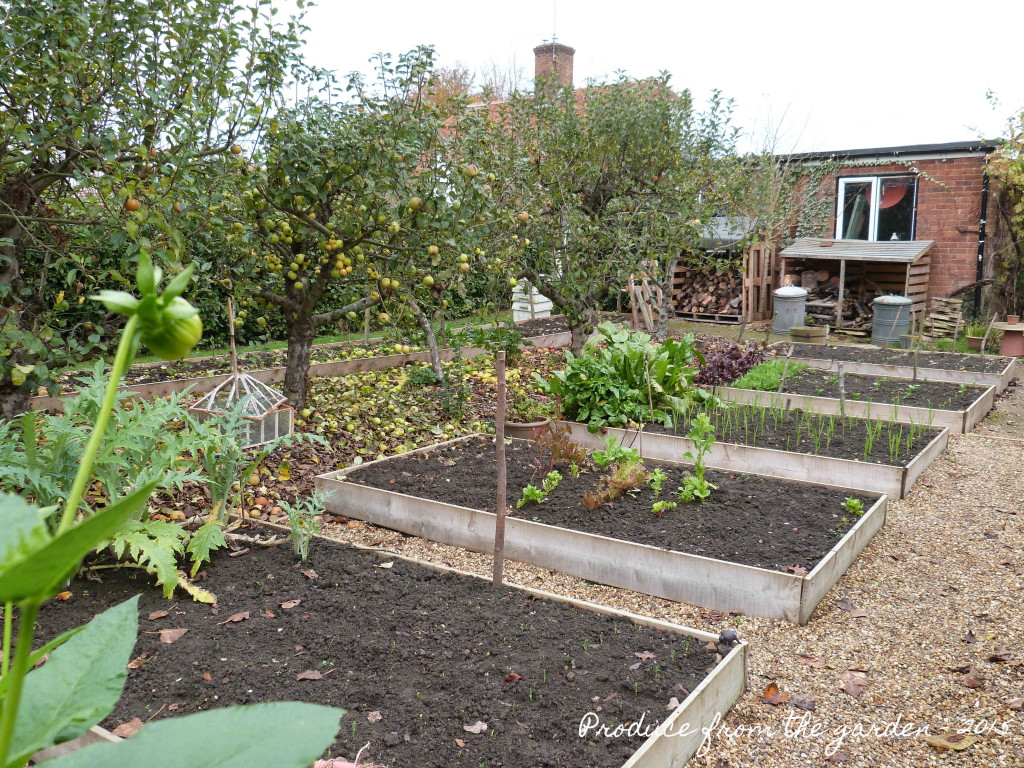 End of October Vegetable Beds