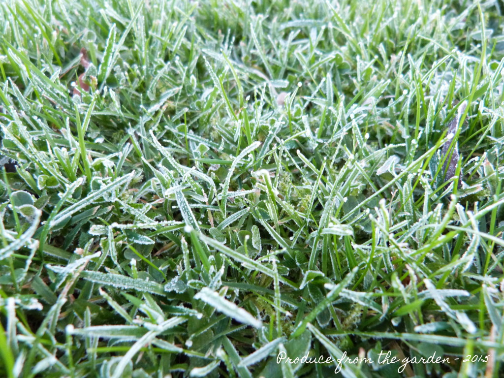 Frost in the grass