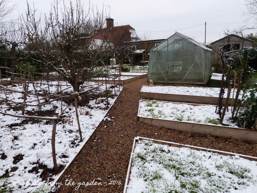 A sprinkling of snow in the lower vegetable beds