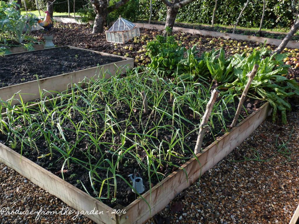Garlic and Spinach