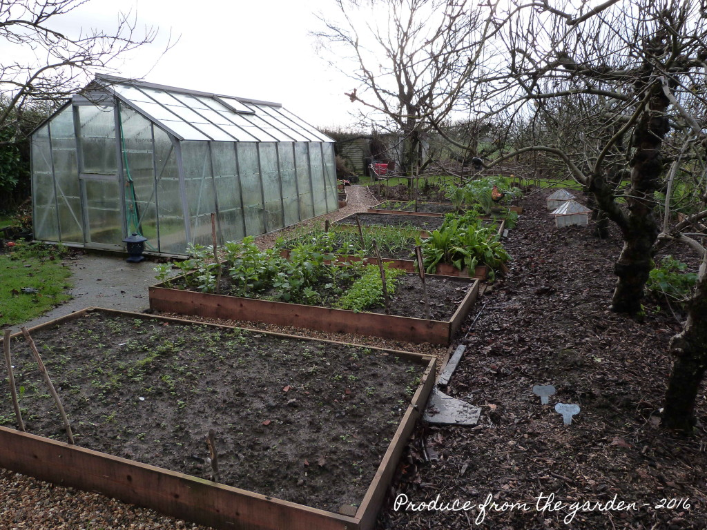 Veg patch in early January