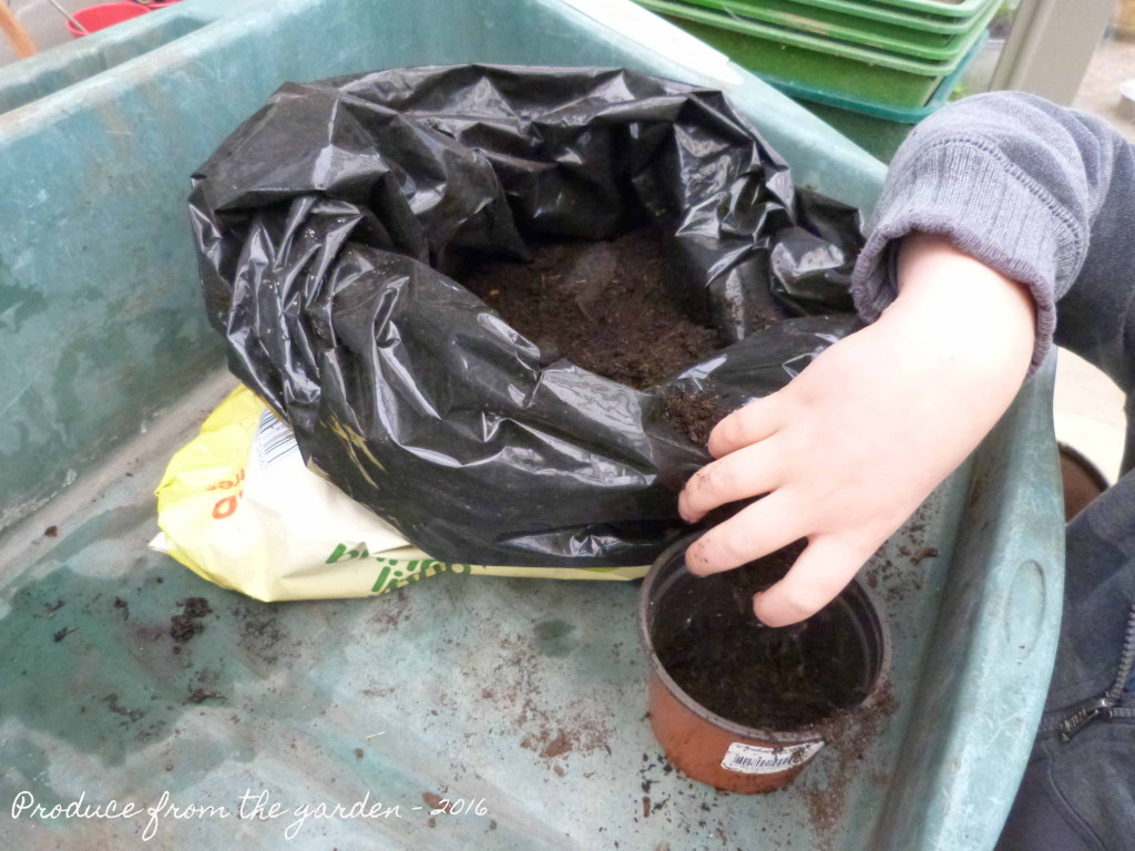 filling pots with compost