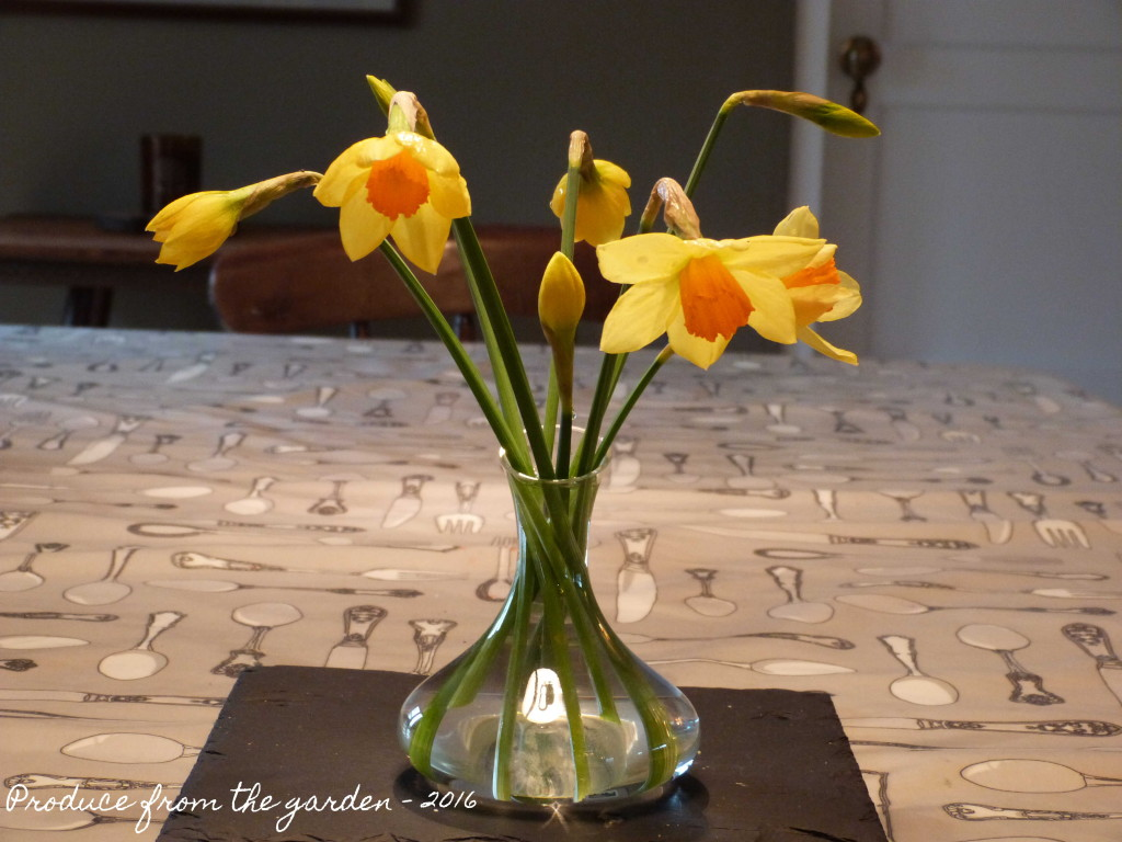 Daffoldils on the table