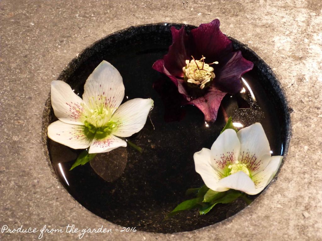 Hellebores in a bowl