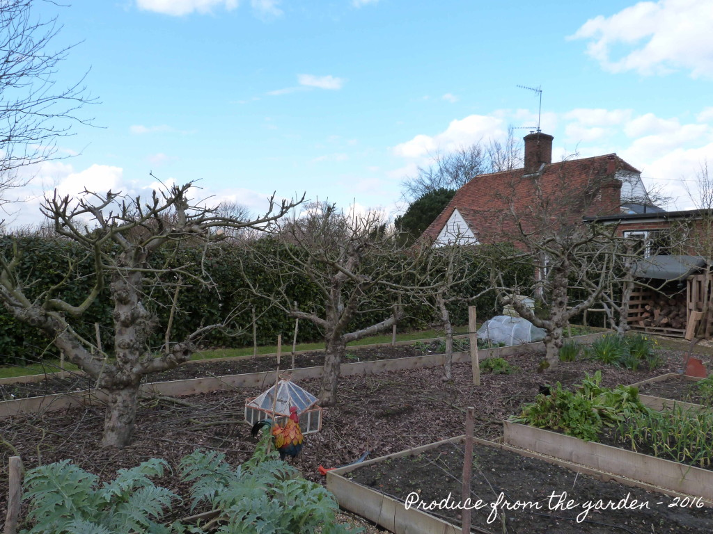 Pruned apple trees
