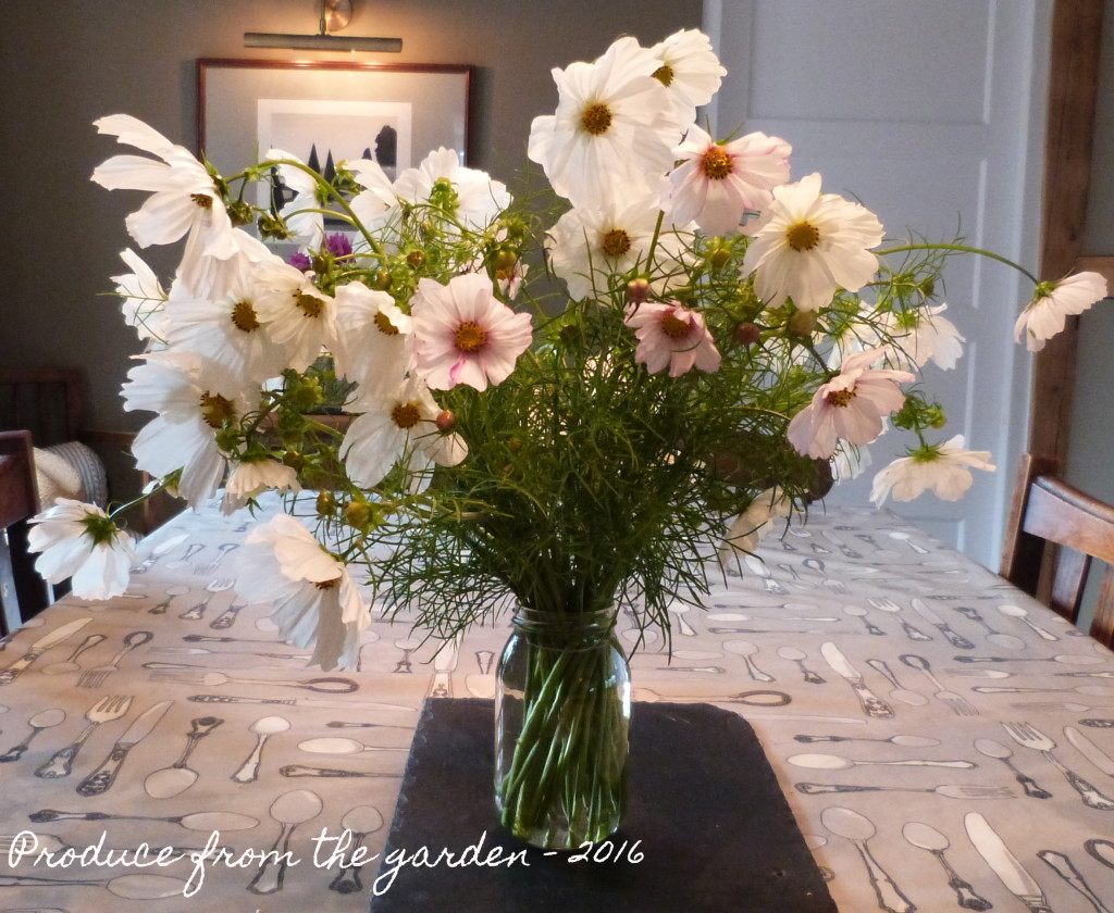 Cosmos purity in a vase