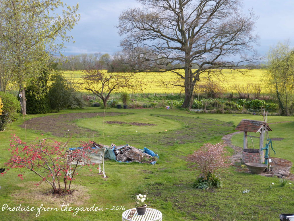 Garden after shot