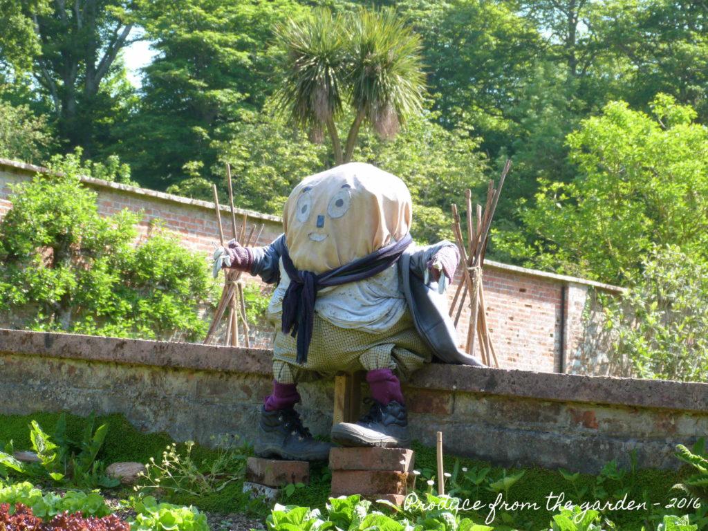 Trengwainton Humpty Dumpty