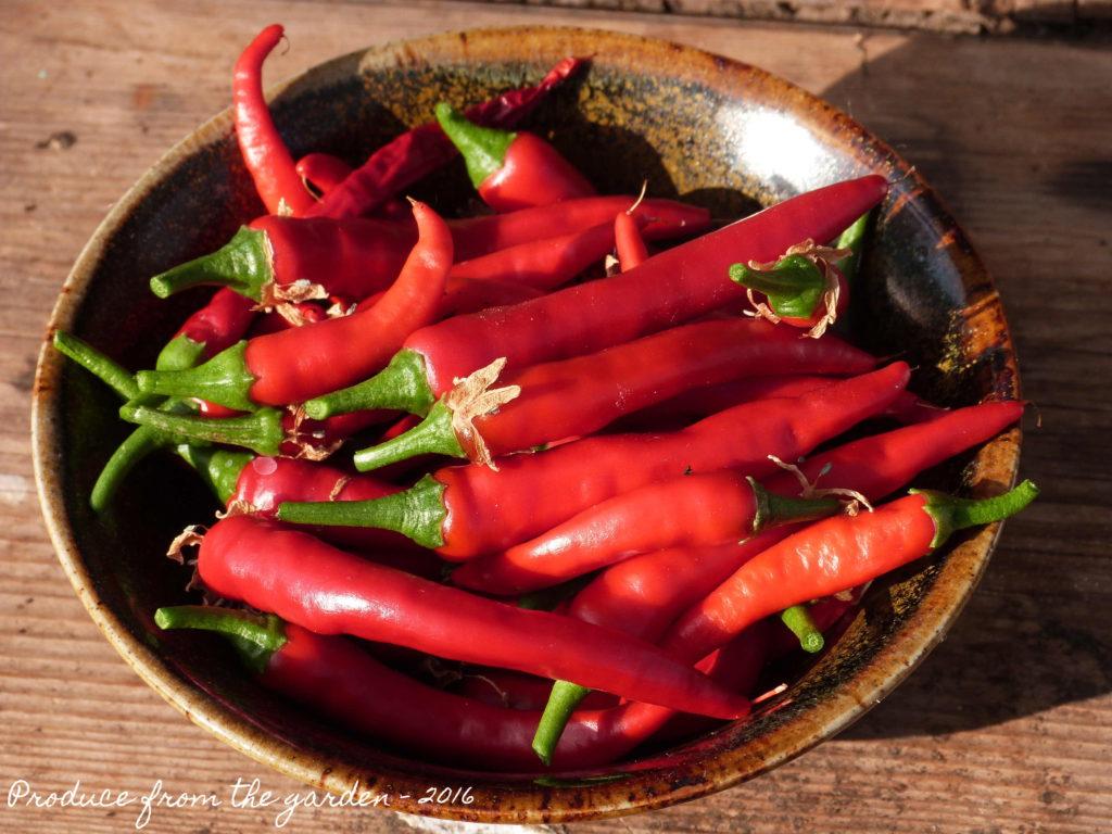 Todays Chilli harvest