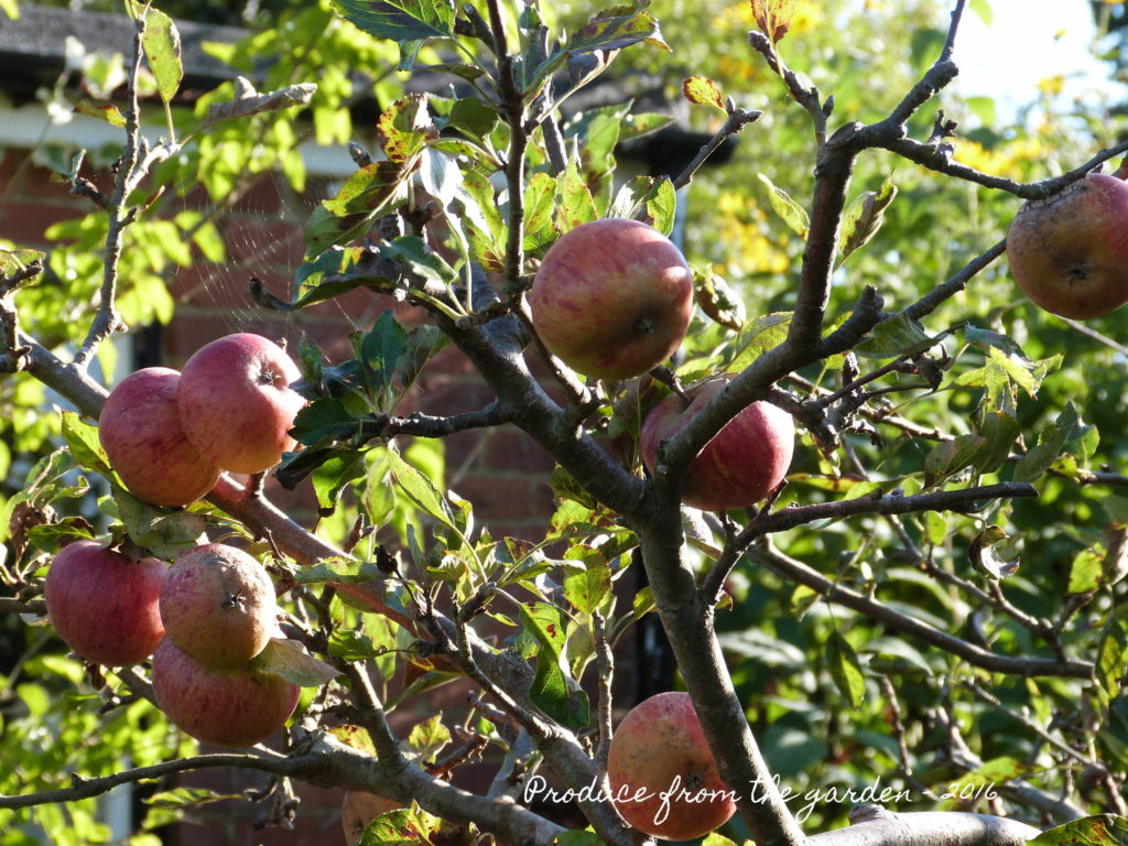 autumn-apples