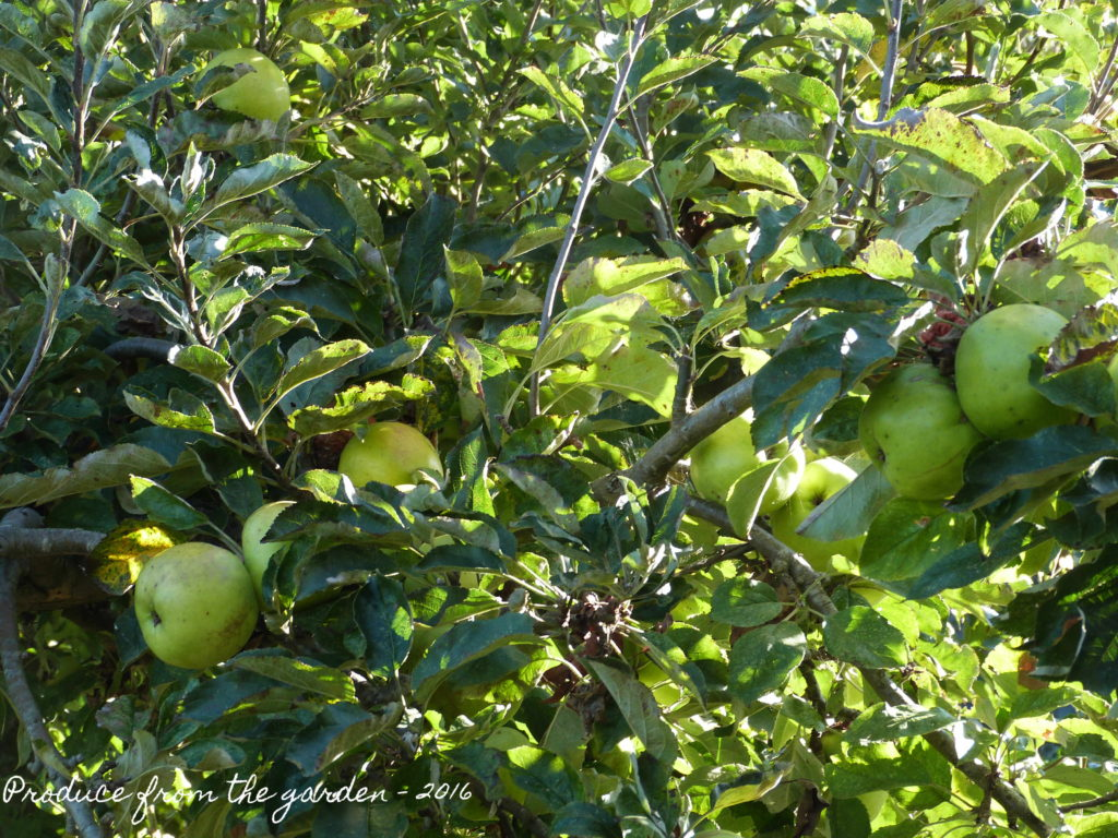 autumn-cooking-apples