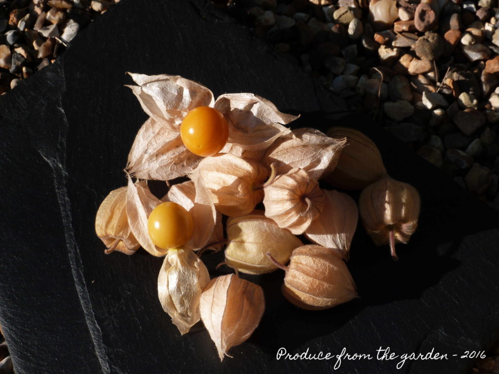 cape-gooseberries-physalis