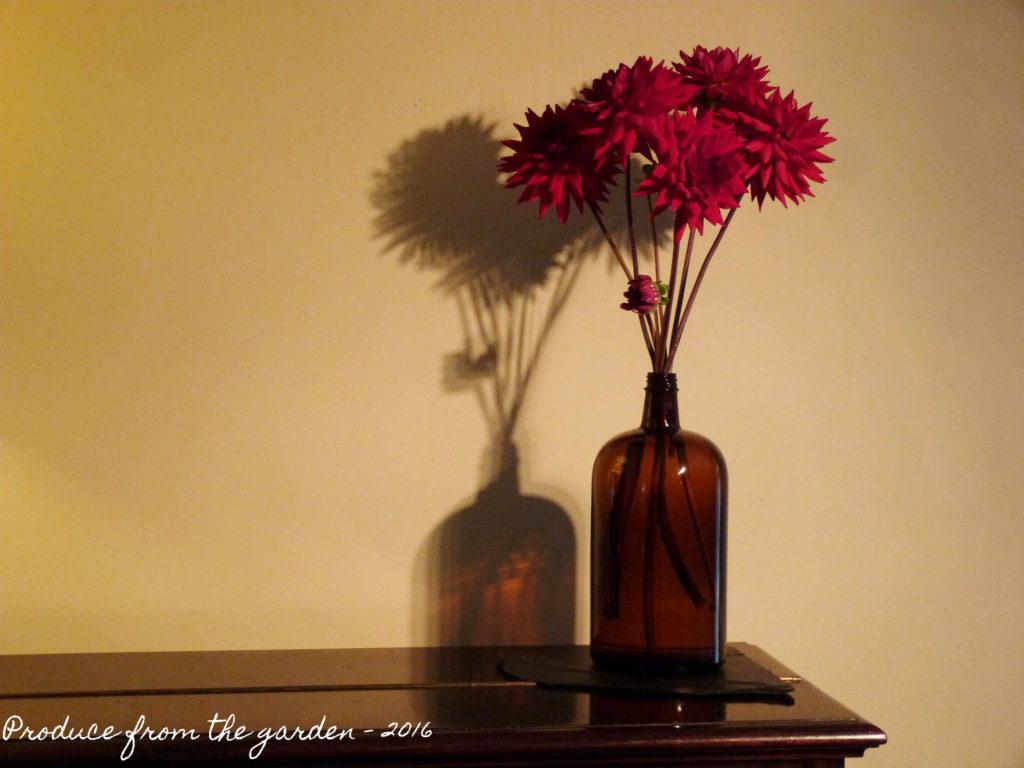 dahlia-in-brown-glass-bottle