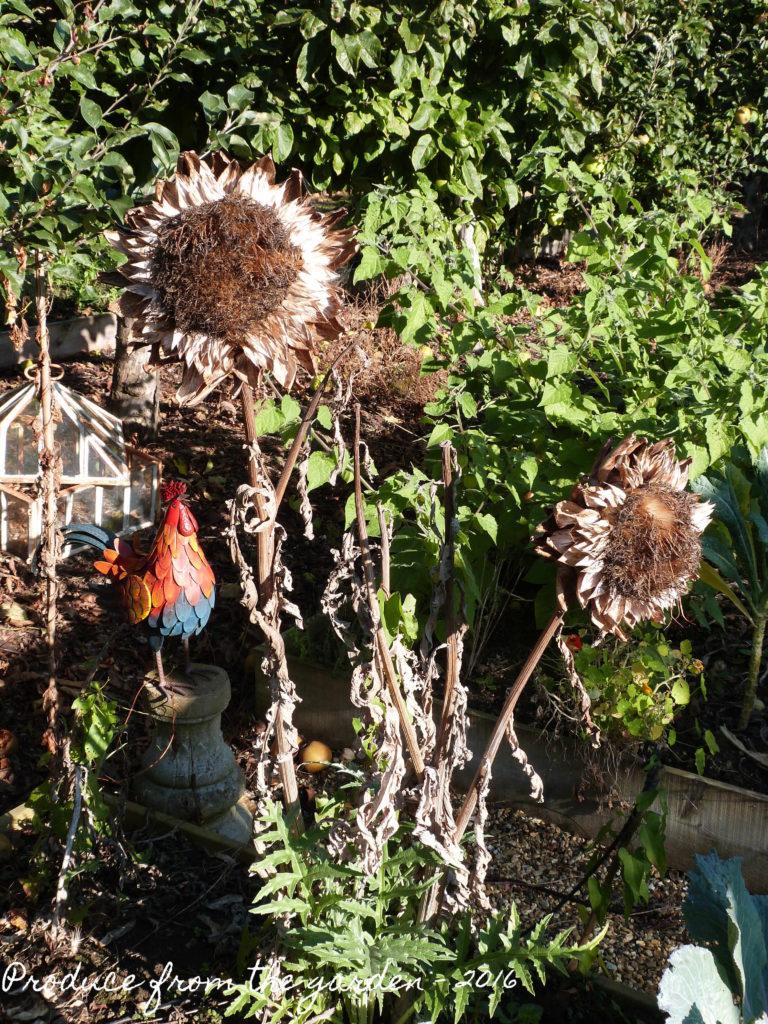 dried-articoke-flowers