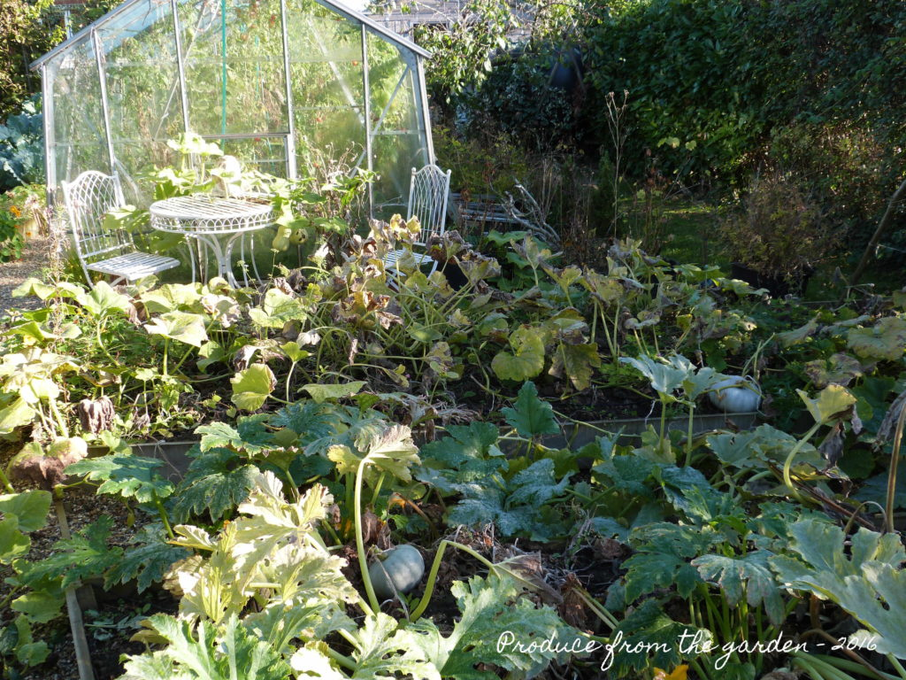 the-autumn-squash-bed