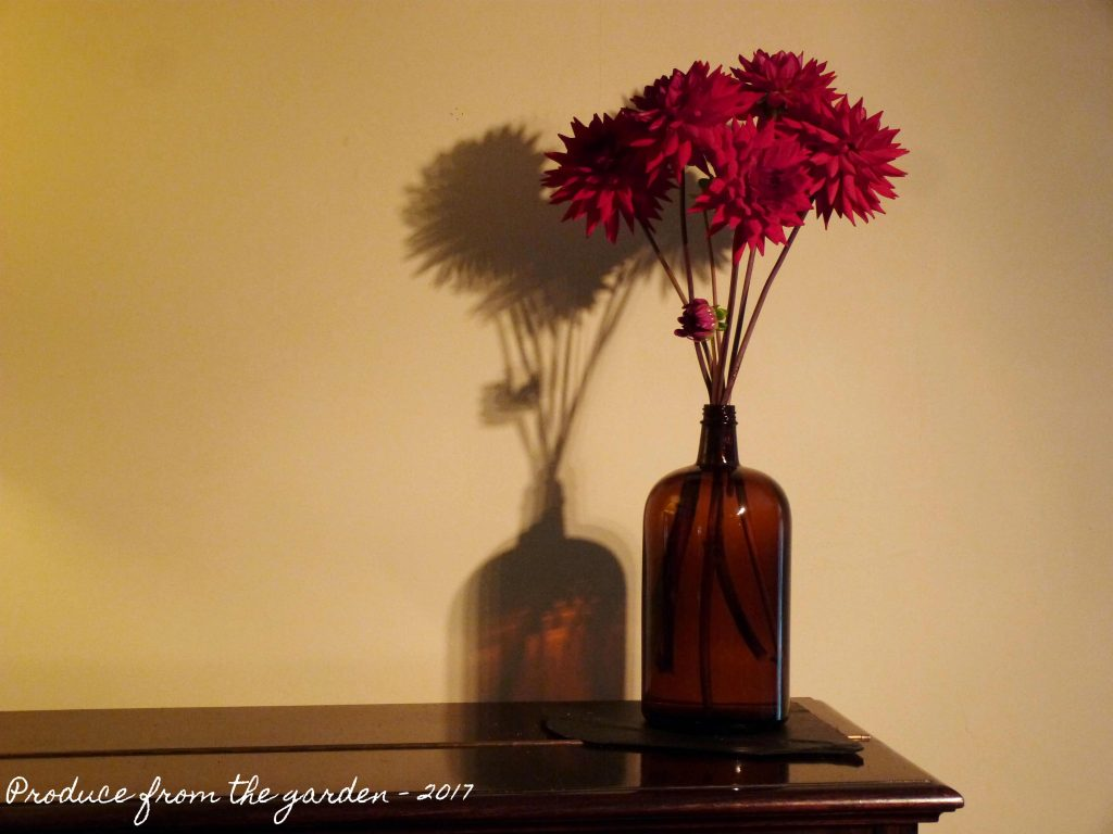 Dahlia in brown glass bottle