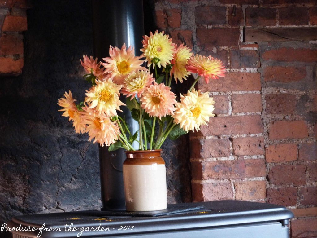 Dahlias on the fire place