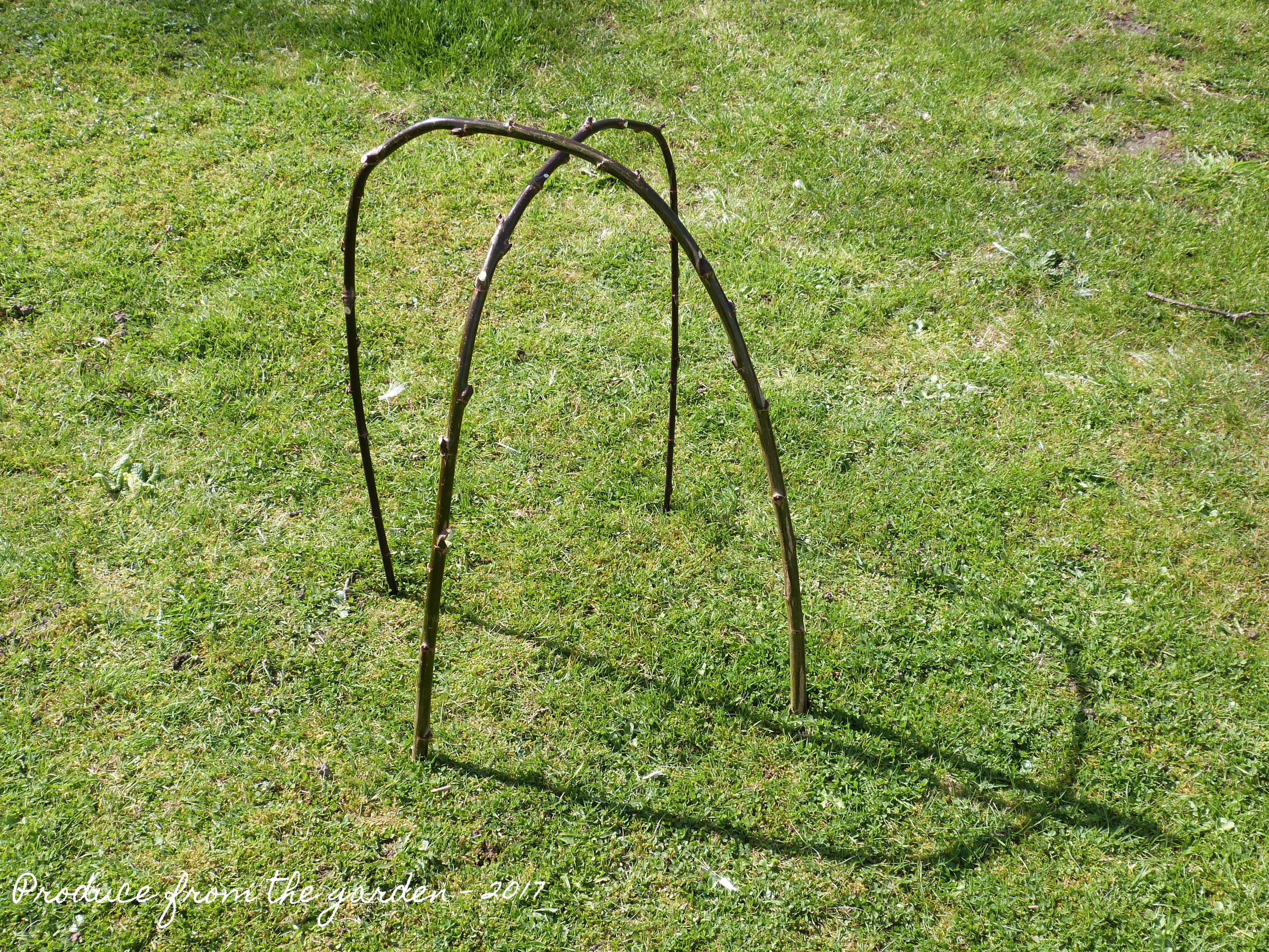 Willow Garden Cloche Garden Ftempo