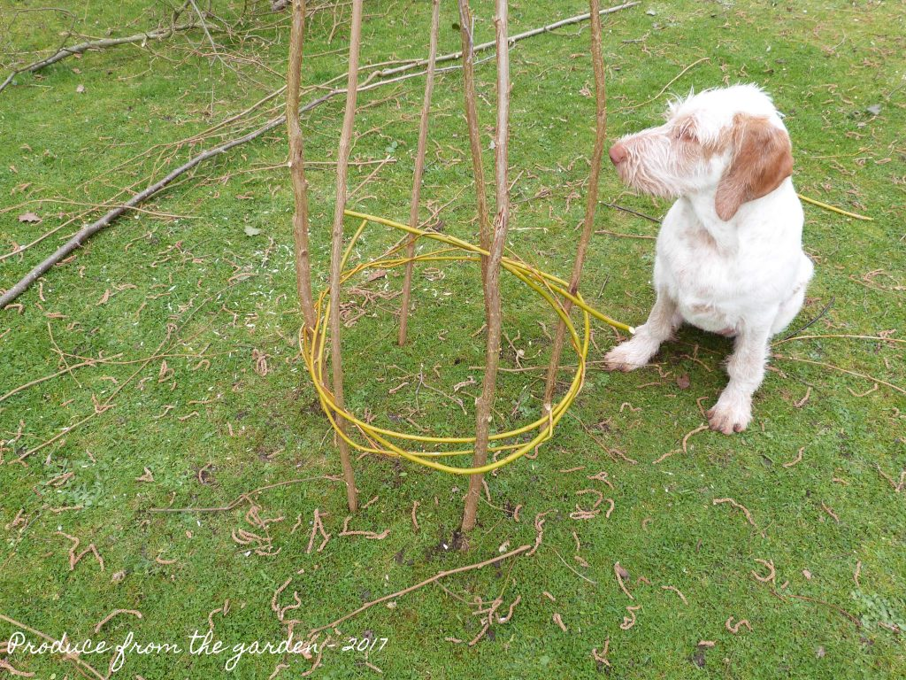 Weaving willow around the obelisk