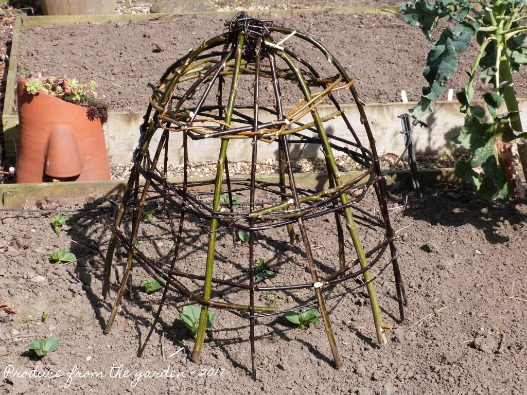 Willow Cloche