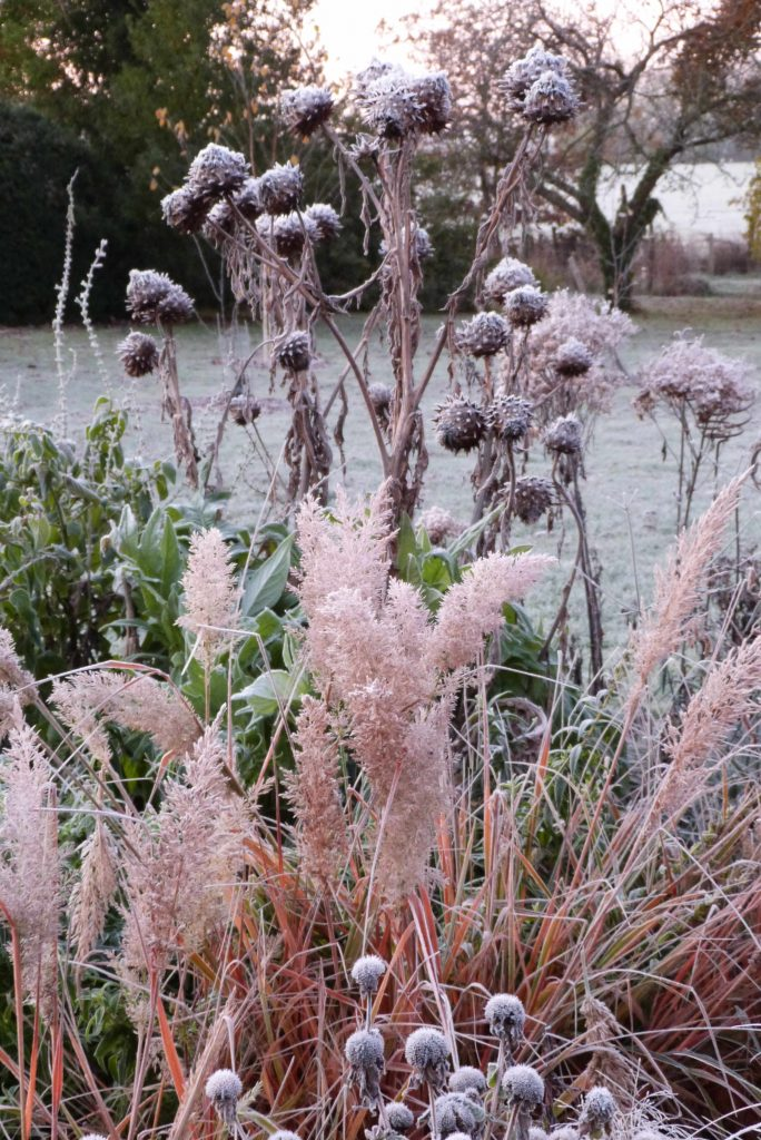 Frost cardoons and grass