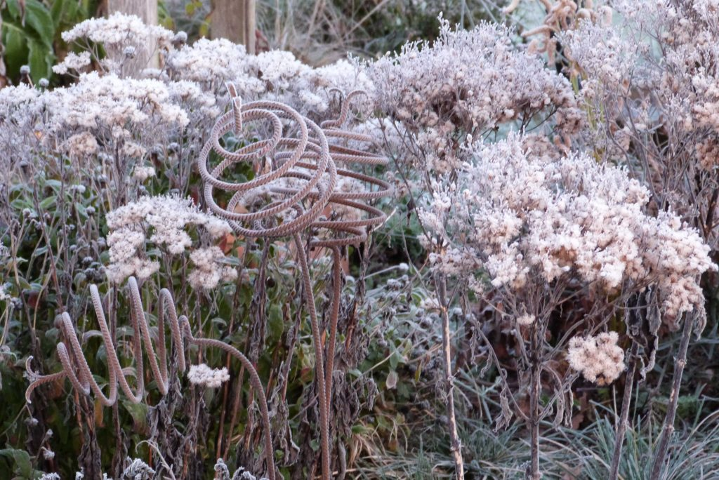 frosted eupatorium